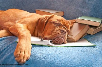 Funny Tired Dogs in Photos-Images | Funny And Cute Animals  Funny Tired Dog...
