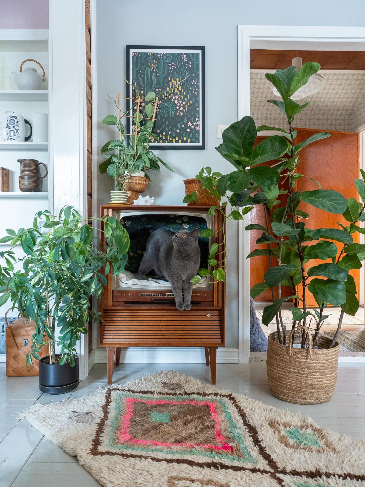 vanhasta televisiosta kissanpeti