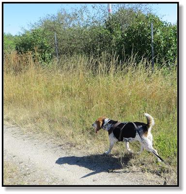 mit Hund unterwegs