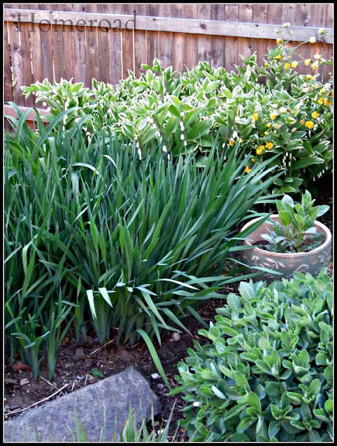 Green garden plants in the garden
