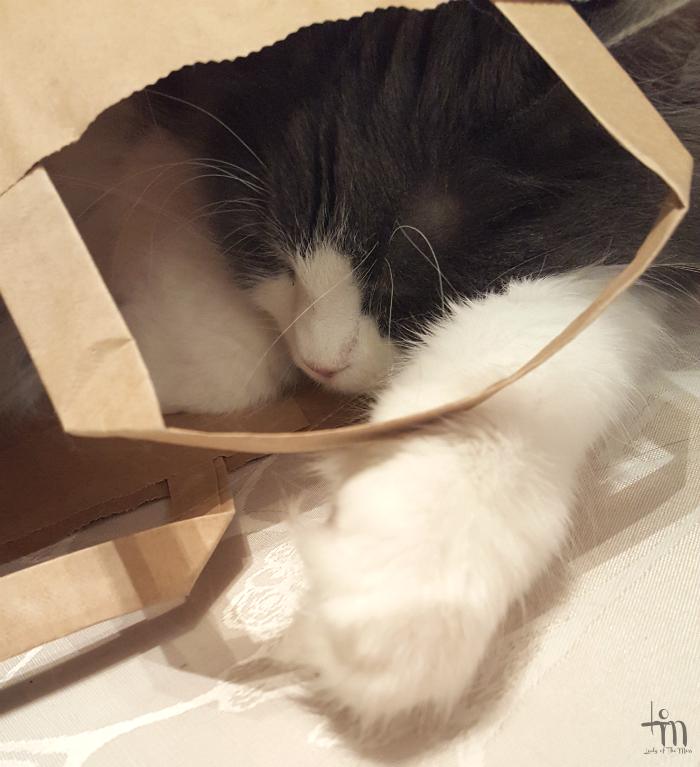 sleeping cat - micuthecat