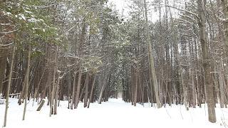 Bois-de-l'Île-Bizard, neige, paysage