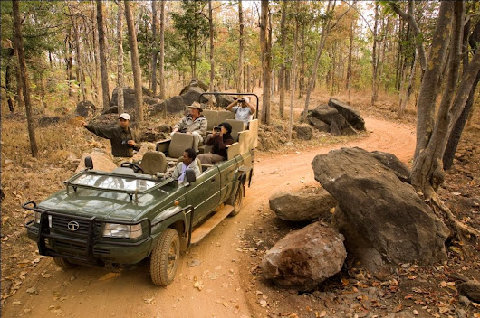 Tiger Travel in Pench National Park