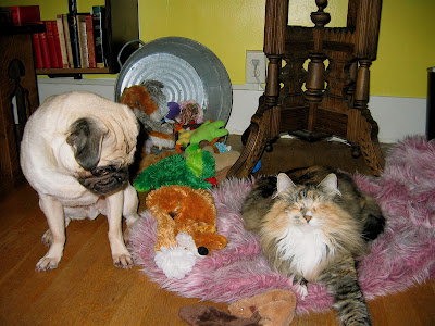 Liam the pug and Lucy the cat in front of a table