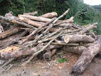 積み上げられた樹木