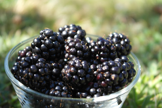 What are the benefits blackberries?
