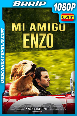 Mi amigo Enzo (2019) HD 1080p BRRip Latino – Ingles