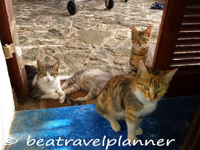 4 amici gatti