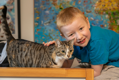 young ginger boy stroking tabby and white cat