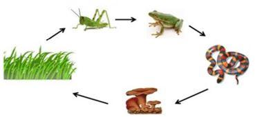 Gambar  Rantai makanan, Sumber: ilmulingkungan.com
