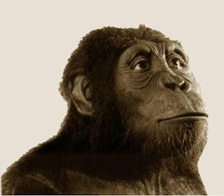O australopitecos - Darwin e Nós