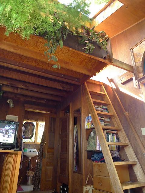 Moon To Moon Tree House