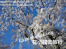 2019首爾櫻花(4月更新):鎮海軍港節節目表+韓國櫻花祭情報+2019韓國櫻花預測+櫻花期