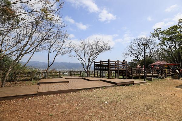 苗栗銅鑼炮仗花海公園的炮仗花牆和櫻花隧道同時盛開,散步好去處