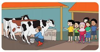 peternakan sapi perah www.simplenews.me