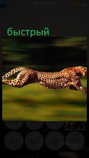 389 фото бежит быстрый гепард по полю 9 уровень