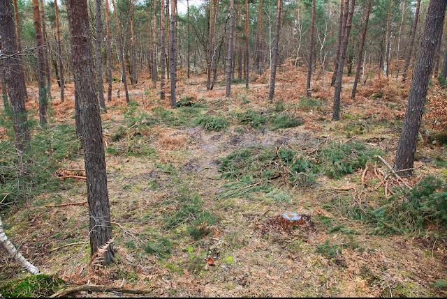 Exemple de coupe de récolte de pin à Franchard Isatis en 2016 avec layon de 4 m tous les 24 m