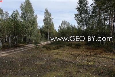 Налибокская пуща у деревни Заборье