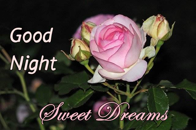 good-night-pink-flower-images-hd