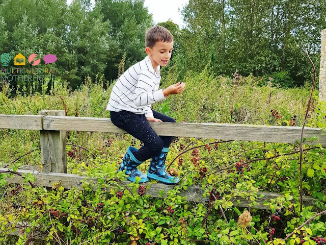 6 Tips For Foraging With Children
