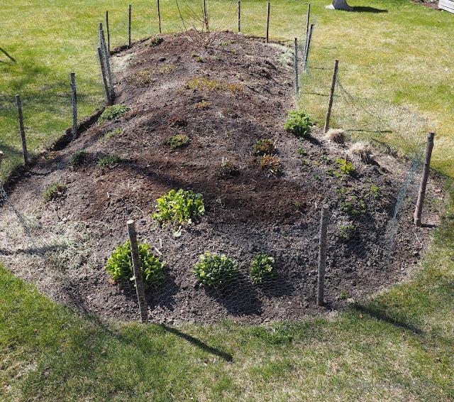 lingonberryhouse, kevät, vehreys, spring, green, leisure home, garden, puutarha, mökki