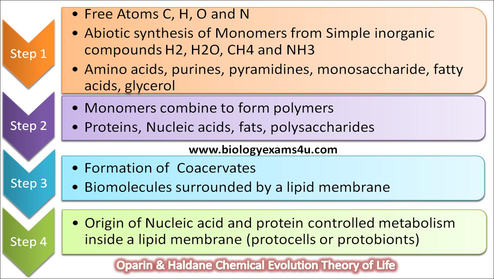 Oparin Haldene Theory of Chemical evolution steps