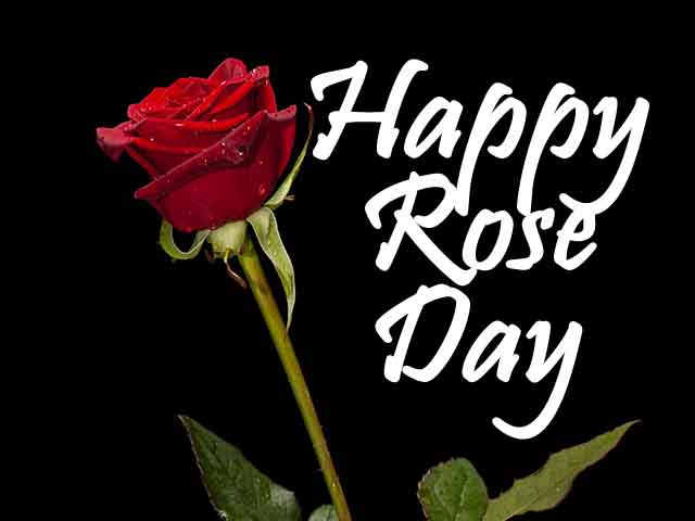 happy rose day images 2022