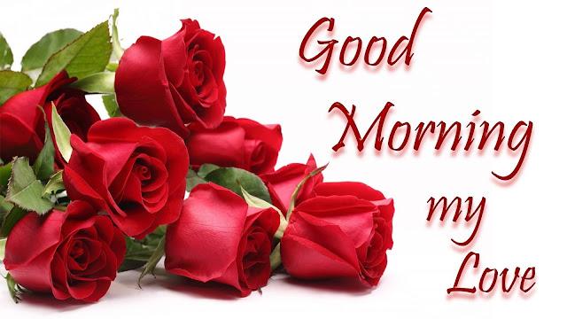 red rose good morning photo