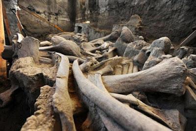 Resti di mammut trovati a Tultepec, Stato del Messico nel 2016.