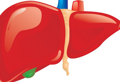 Inilah Organ Tubuh Yang Paling Banyak Diperjualbelikan Di Dunia