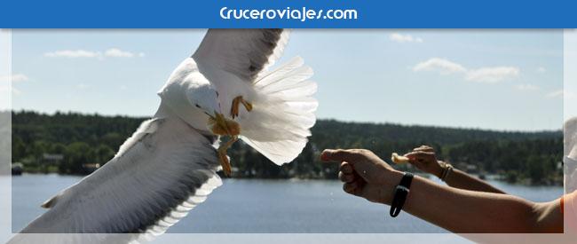 Fotografías de gaviotas