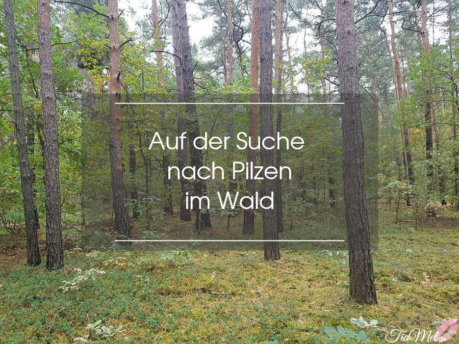 auf der suche nach pilzen im wald tiamel. Black Bedroom Furniture Sets. Home Design Ideas