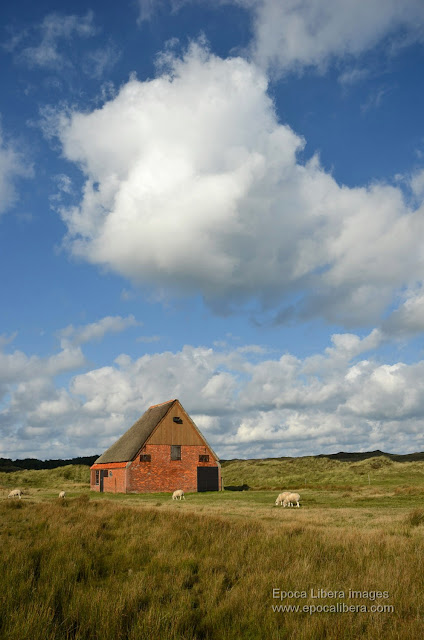 Farmhouse in Dunes of Texel National Park.