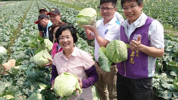彰化縣政府挺農民再出招 高麗菜水餃賽邀你挑戰