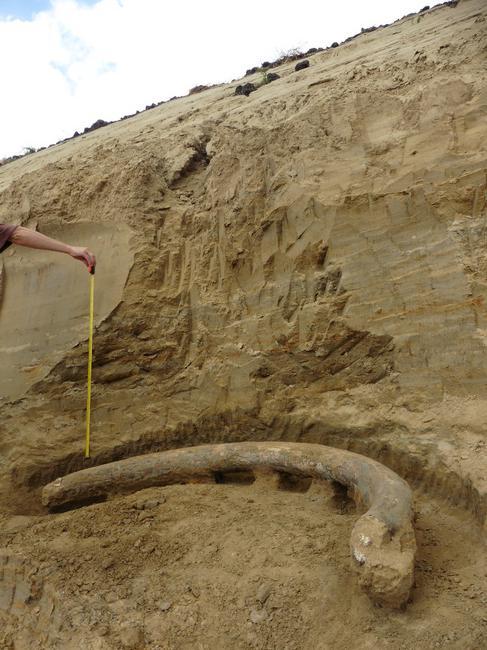 Χαυλιόδοντες μαμούθ ηλικίας 1 εκατομμυρίου ετών βρέθηκαν τυχαία έξω από τη Βιέννη