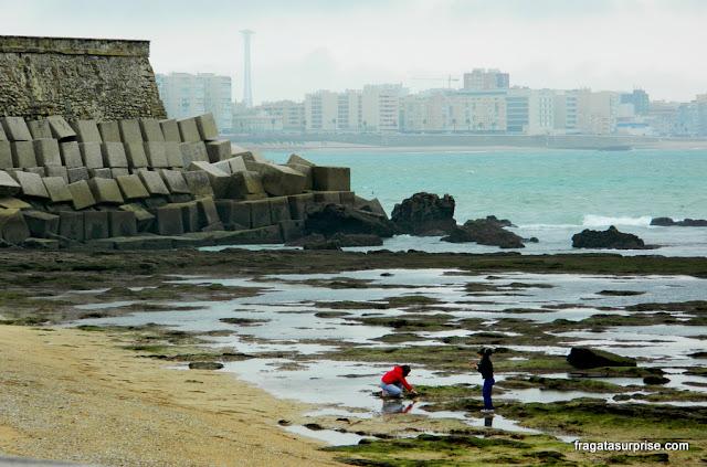 Marismas de Cádiz