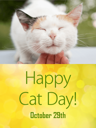 National Cat Day Wishes Images download