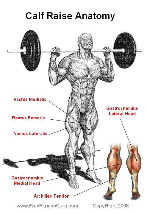 The 5 Best Exercises Leg Bodybuilder