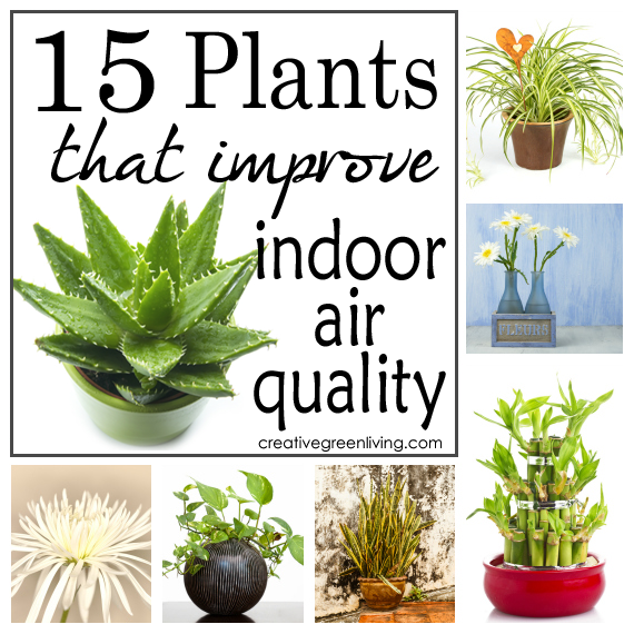 15 Plants That Improve Indoor Air Quality - Creative Green ...