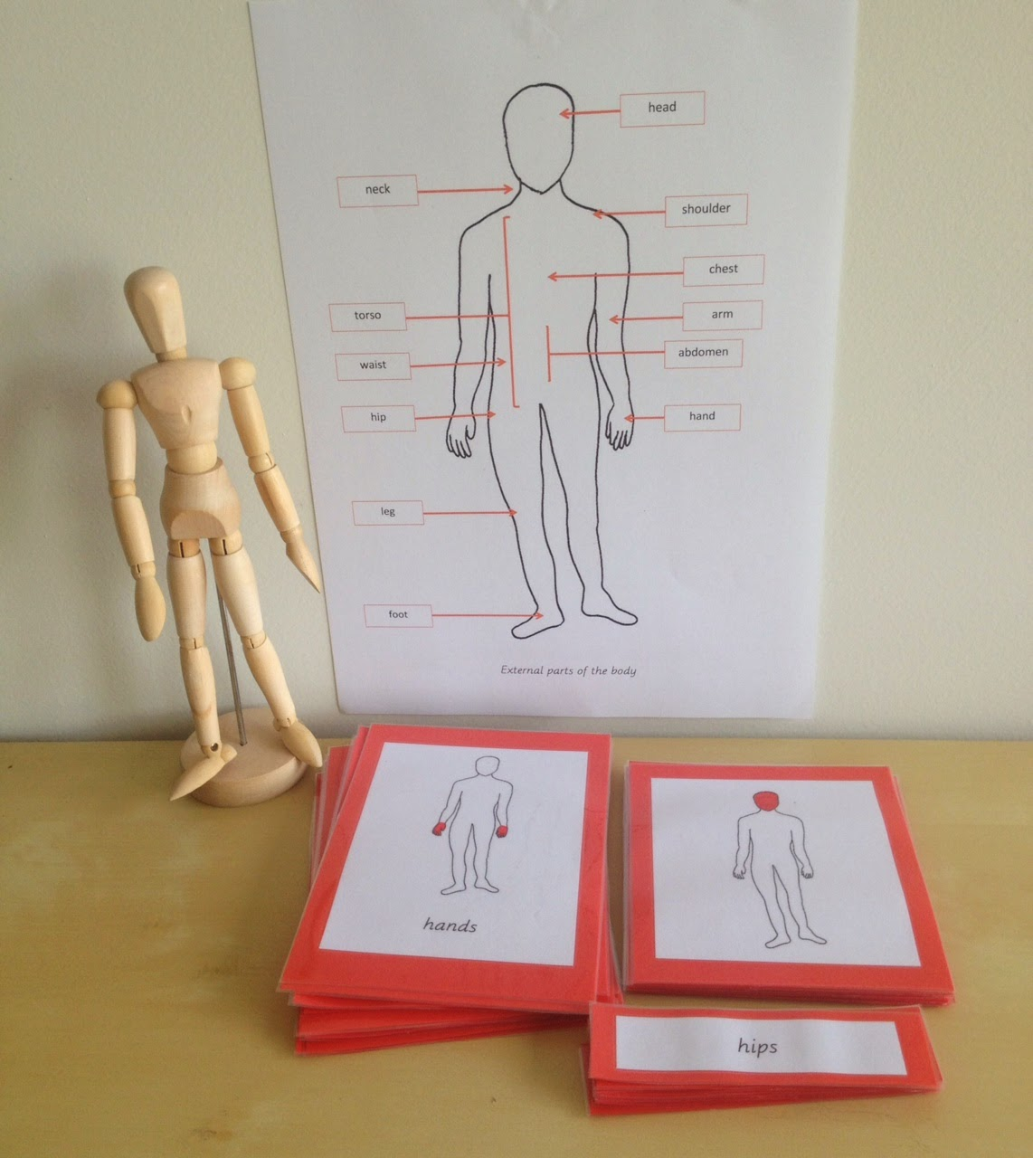 Elementary Observations External Parts Of The Body