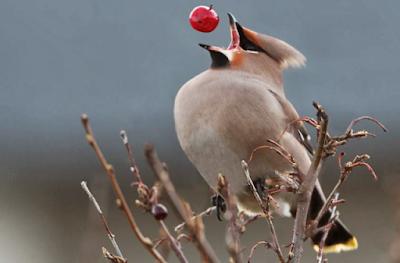 Чому птахи без зубів - науковці знайшли відповідь
