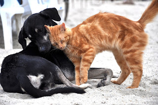 texto sobre animais de estimação