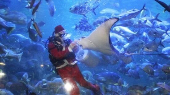 picture wow ada santa claus beri makan ikan di seaworld ancol