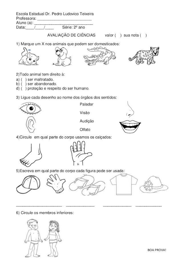 AVALIAÇÃO 2º ANO: ANIMAIS DOMÉSTICOS E CINCO SENTIDOS.
