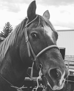 JW's Horse