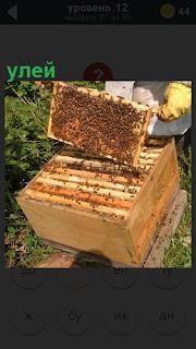 на улице пчеловод открыл улей и вытащил соты на просмотр, вокруг пчелы