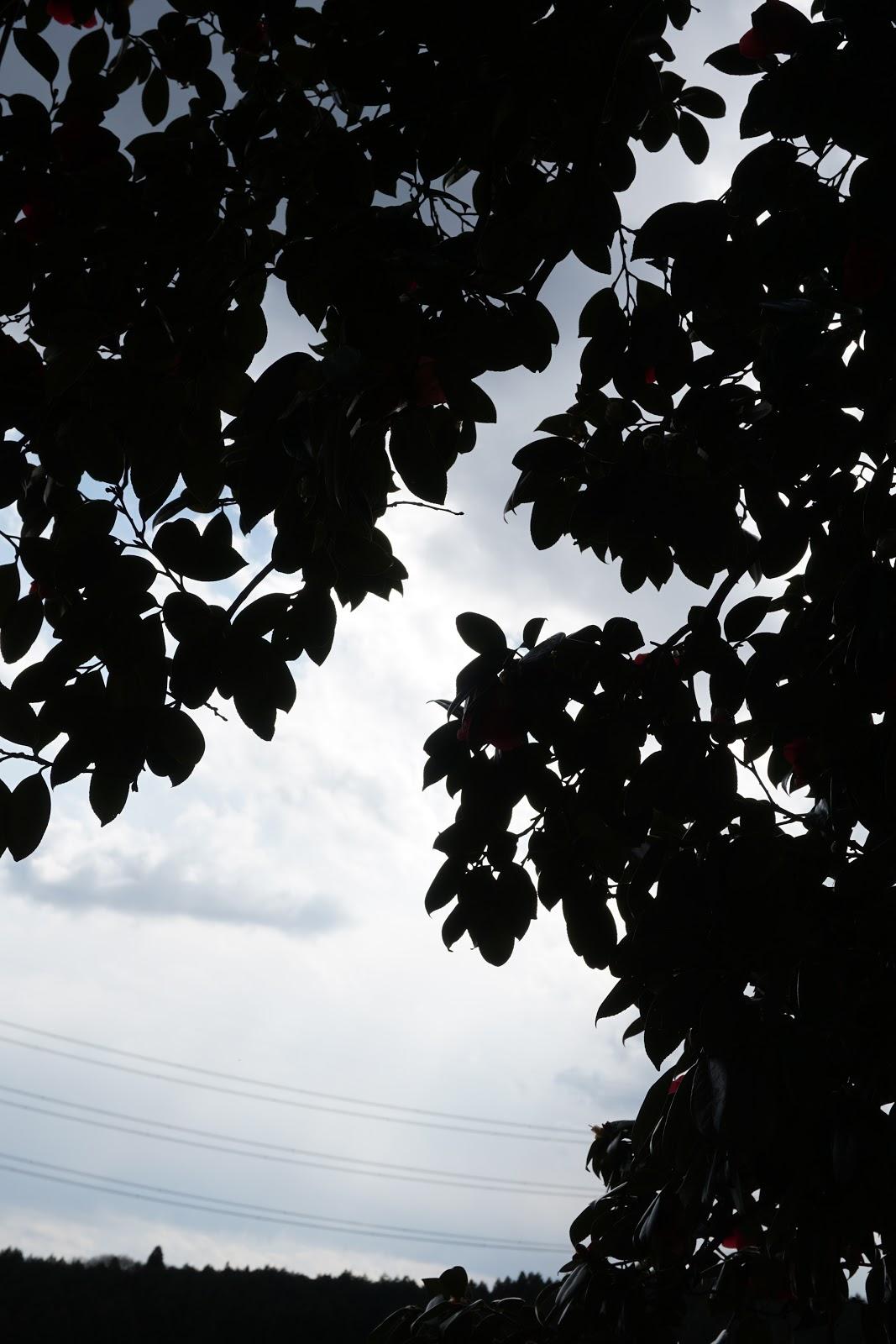 曇り空の逆光で黒潰れした椿の木陰