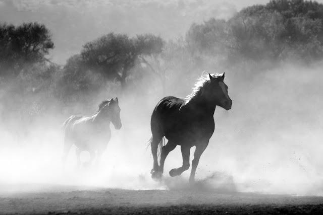 صور سباقات الخيول القوية