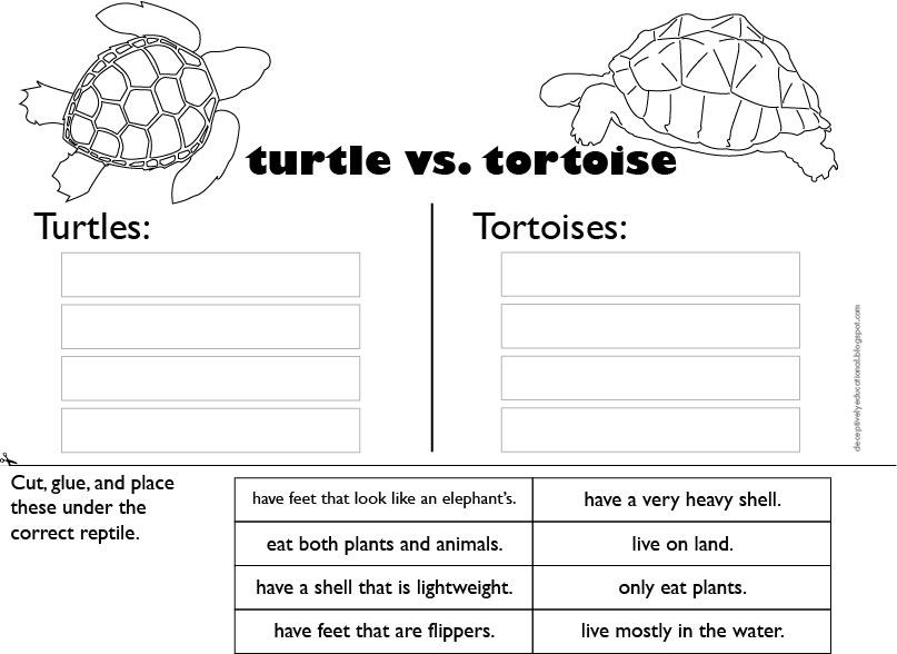 relentlessly fun deceptively educational turtle or tortoise reading comprehension art. Black Bedroom Furniture Sets. Home Design Ideas