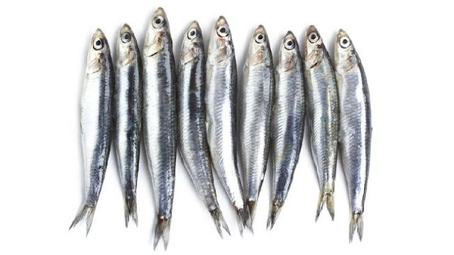 Daftar Harga Supplier Ikan Teri Laut Jogja Murah